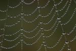 ämblikuvõrk kastes