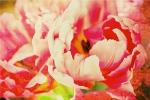 Miurio Flower 1