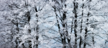 Talvine puumuster