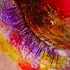 silm kinnine2