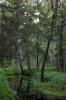 Puud jõe ääres