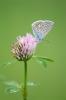 ristikhein ja liblikas