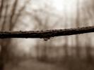branch - niina eillilä
