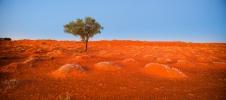 puu kõrbes