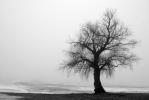 üksik_puu