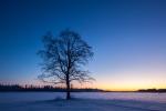 puu ja põld