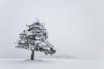 lumine_mänd