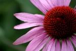 lilla lill